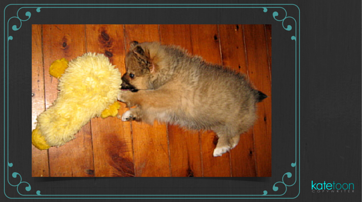 Why your website is like a puppy