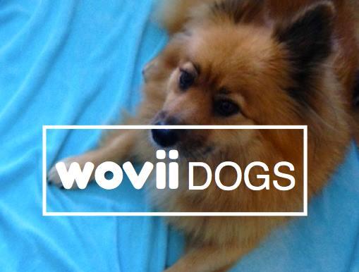 wovii dogs