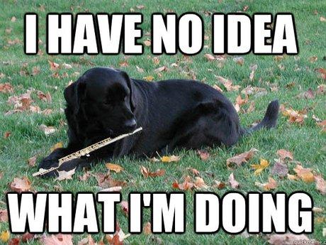 dog flute